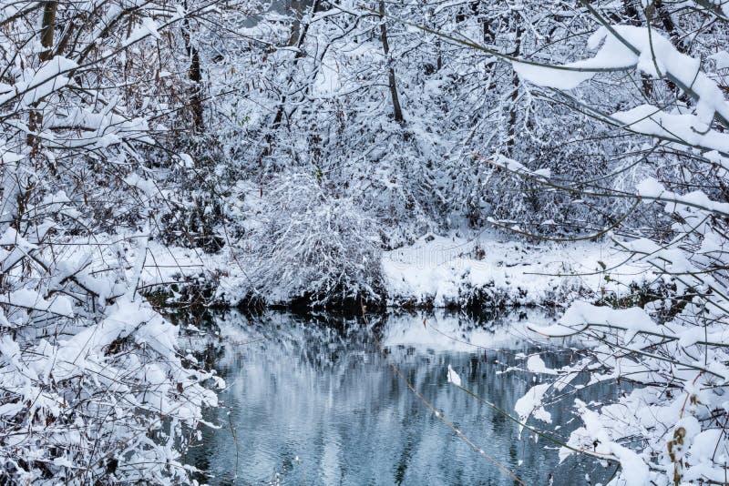 用雪盖的河本质上和分支和树 免版税库存图片