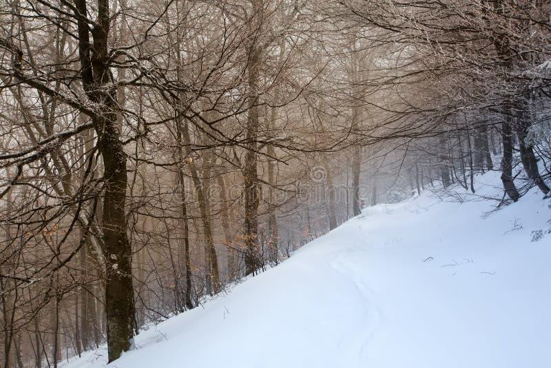 用雪盖的神秘的冬天森林在多云天 库存图片