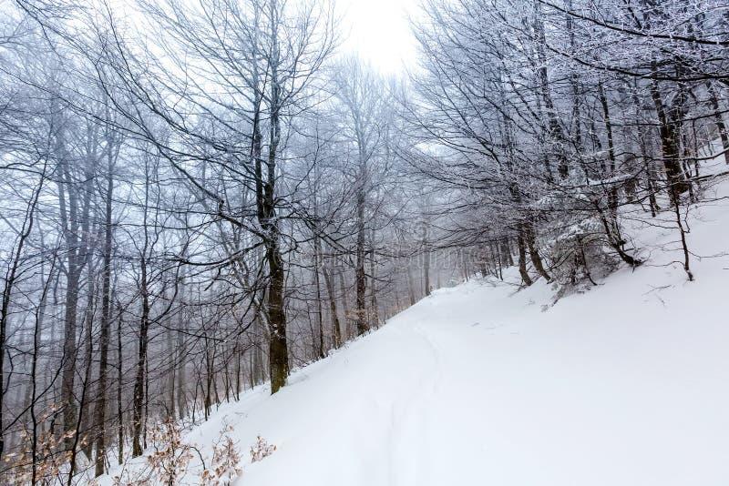 用雪盖的神秘的冬天森林在多云天 库存照片