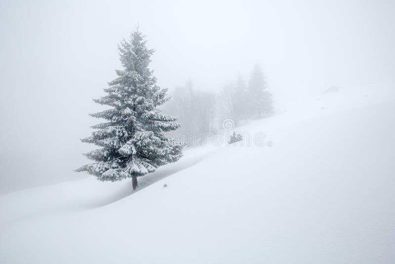 用雪盖的神秘的冬天森林在多云天 免版税图库摄影