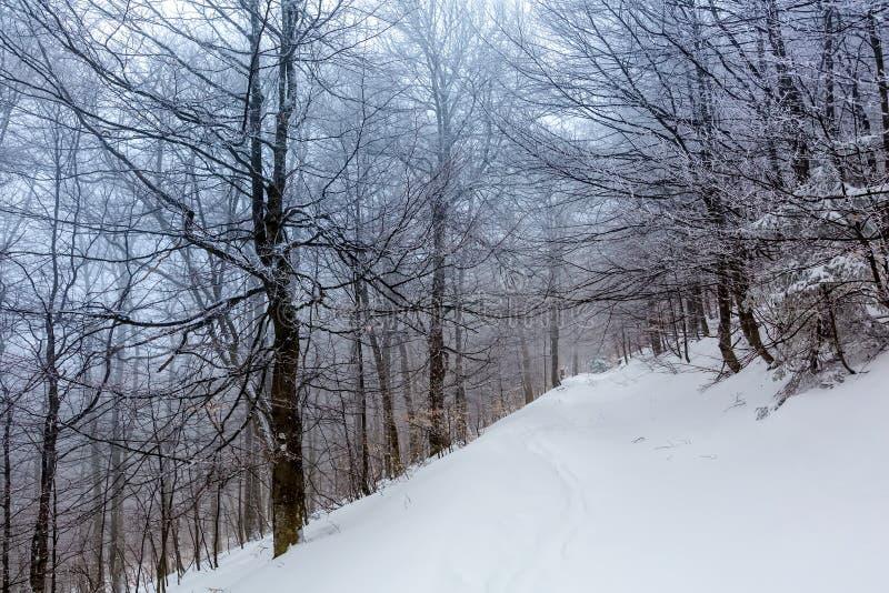 用雪盖的神秘的冬天森林在多云天 免版税库存照片
