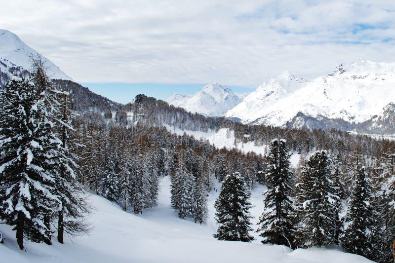 用雪盖的美丽的瑞士山,在Sils玛丽亚 免版税库存图片