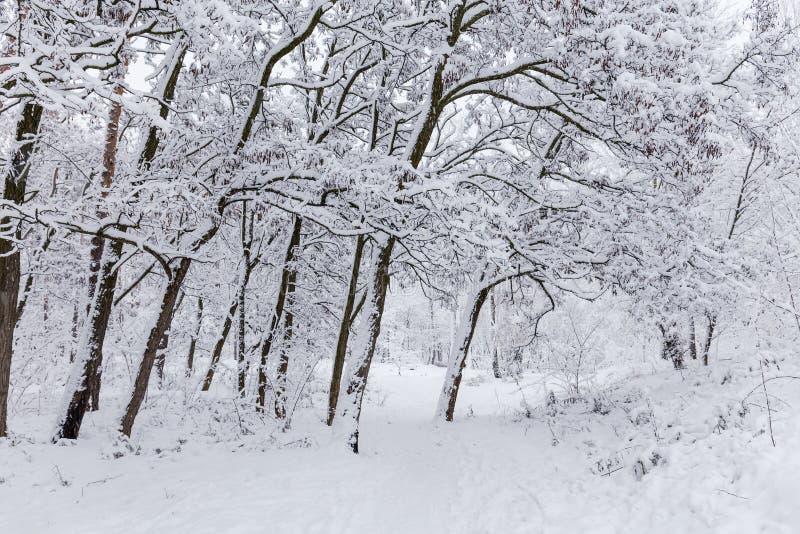 用雪盖的黑蝗虫树在公园 图库摄影