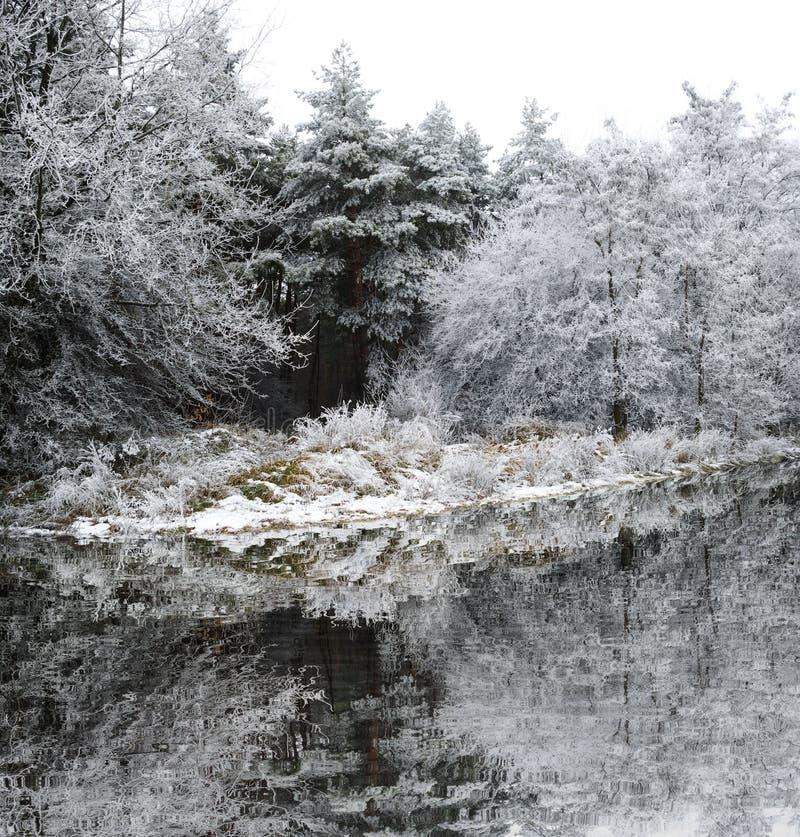 用霜盖的树在晚秋天由湖 库存照片