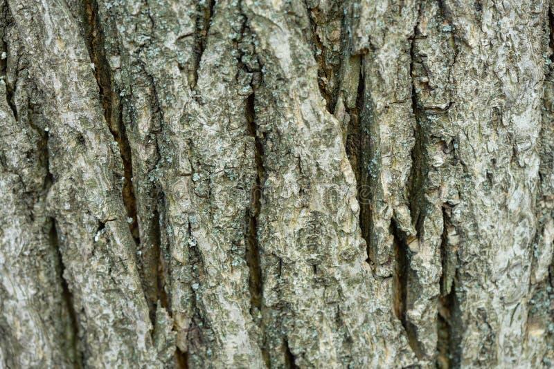 用青苔盖的一棵老树的吠声 创造性的葡萄酒自然本底 免版税库存照片