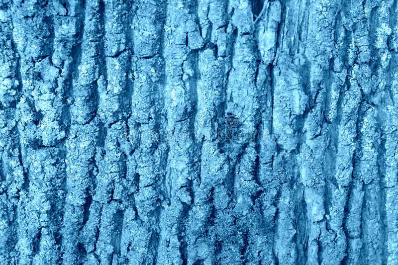 用青苔盖的一棵老树的吠声 自然抽象背景蓝色定了调子 免版税库存照片
