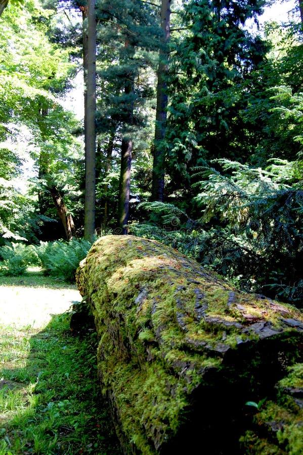 用青苔盖的偏僻,击倒的树干 库存图片