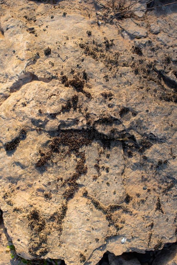 用青苔盖的崩裂的石化黏土作为背景 免版税库存照片