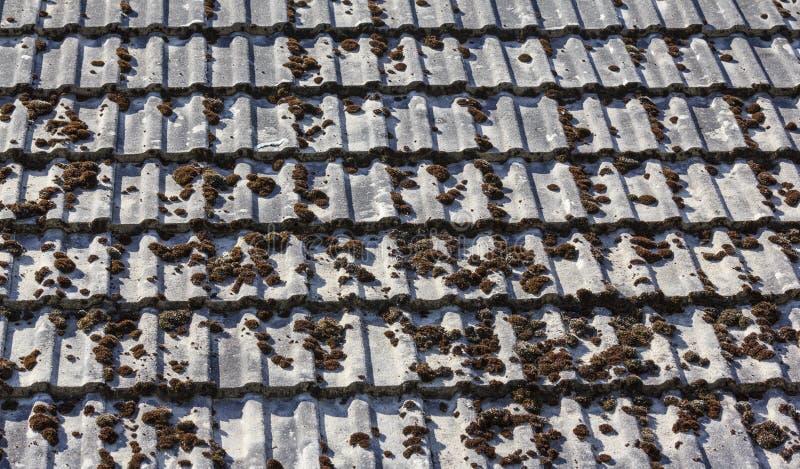用青苔盖的铺磁砖的国家屋顶 免版税图库摄影