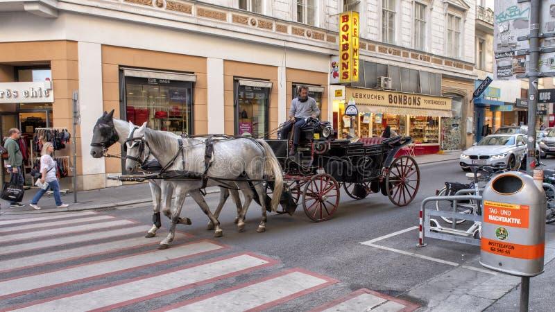 用马拉的支架乘驾Fiaker在维也纳,奥地利 免版税库存图片