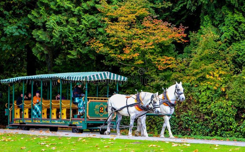 用马拉的支架在史丹利公园,温哥华, BC 库存照片