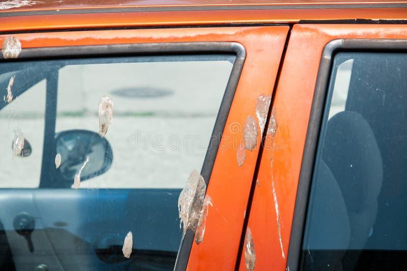 用鸟粪便或船尾盖的肮脏的橙色汽车在油漆关闭在门和窗口 库存图片