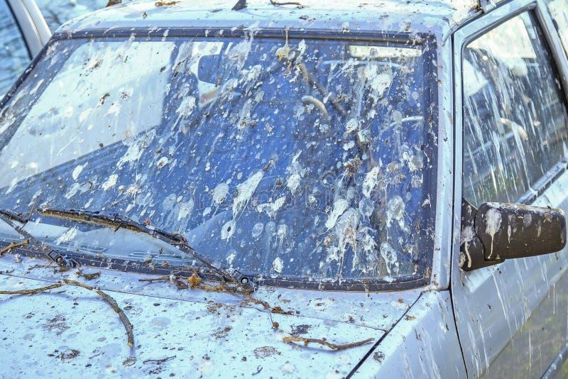 用鸟船尾盖的汽车3 图库摄影