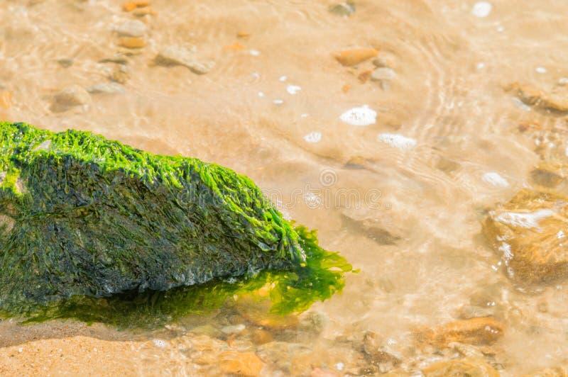 用绿色海草盖的大岩石 免版税库存照片