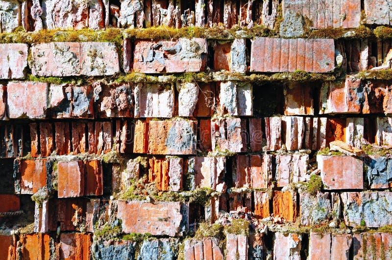 用绿色青苔由红砖制成和部分盖的老破裂的砖砌-自然本底 库存照片