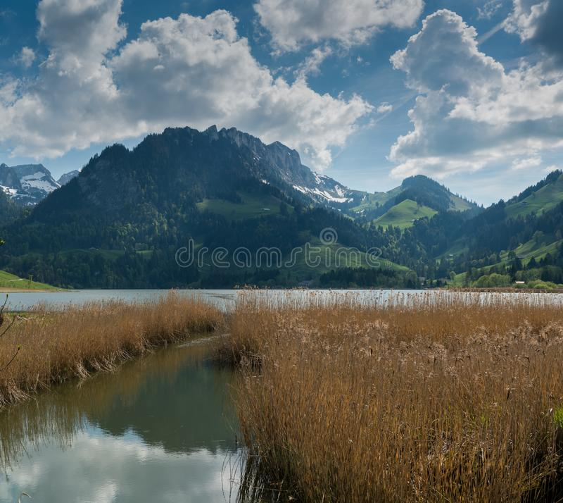 田园诗山风景在有一棵湖和金黄沼泽草的瑞士阿尔卑斯山脉在前景 库存照片