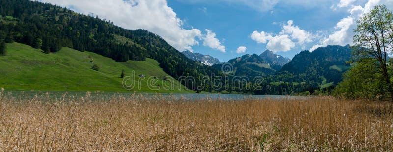 田园诗山风景在有一棵湖和金黄沼泽草的瑞士阿尔卑斯山脉在前景 免版税库存图片
