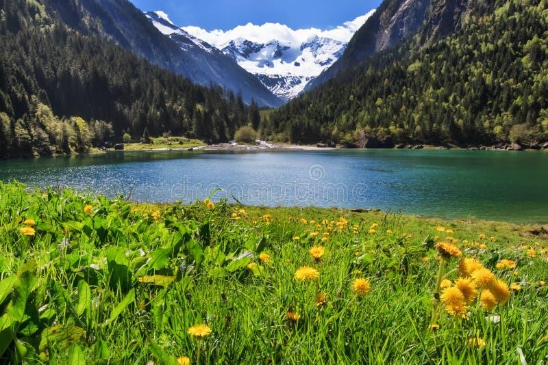 田园诗山风景在阿尔卑斯与开花的花和山湖的春天 Stilluptal,奥地利,蒂罗尔 库存图片