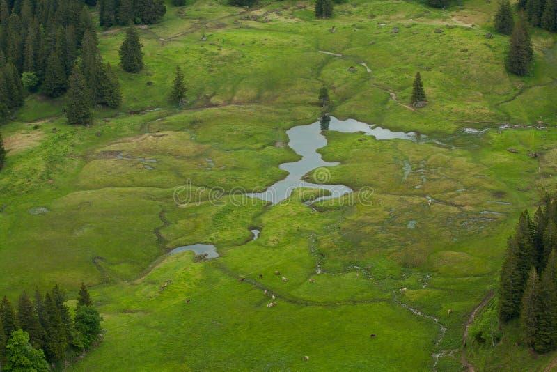 田园诗风景在有吃草在新鲜的绿色山的母牛的阿尔卑斯吃草巴伐利亚,德国 免版税库存照片