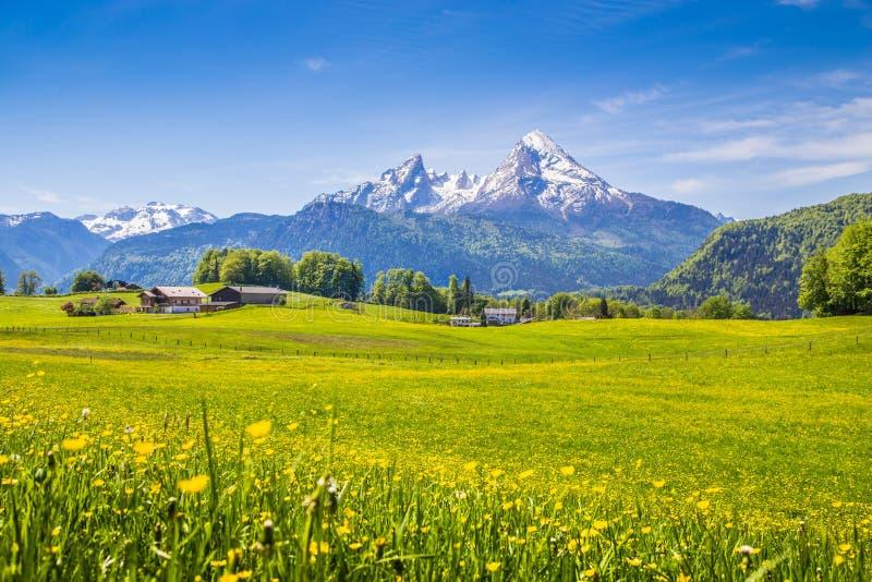 田园诗风景在有绿色草甸和花的阿尔卑斯 免版税图库摄影