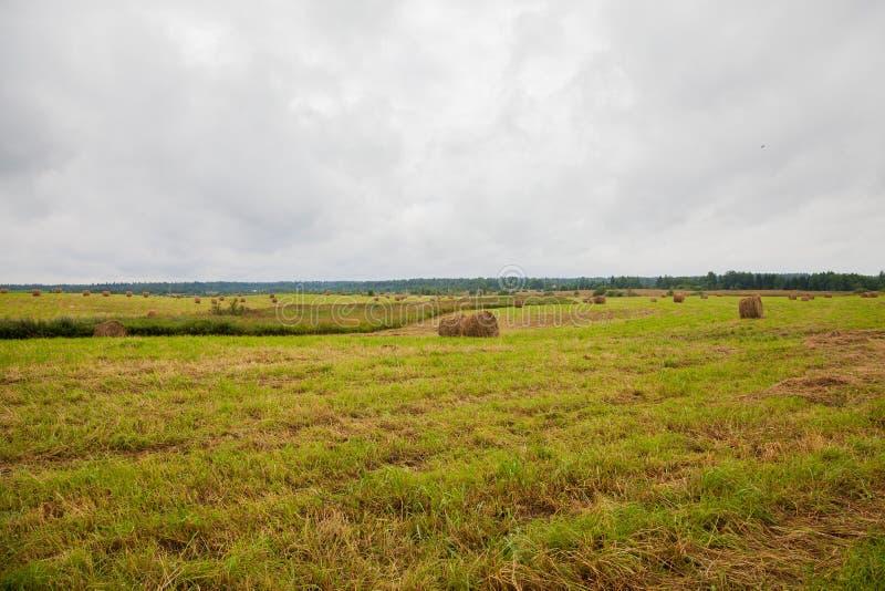 田地上的圆形干草堆 库存照片