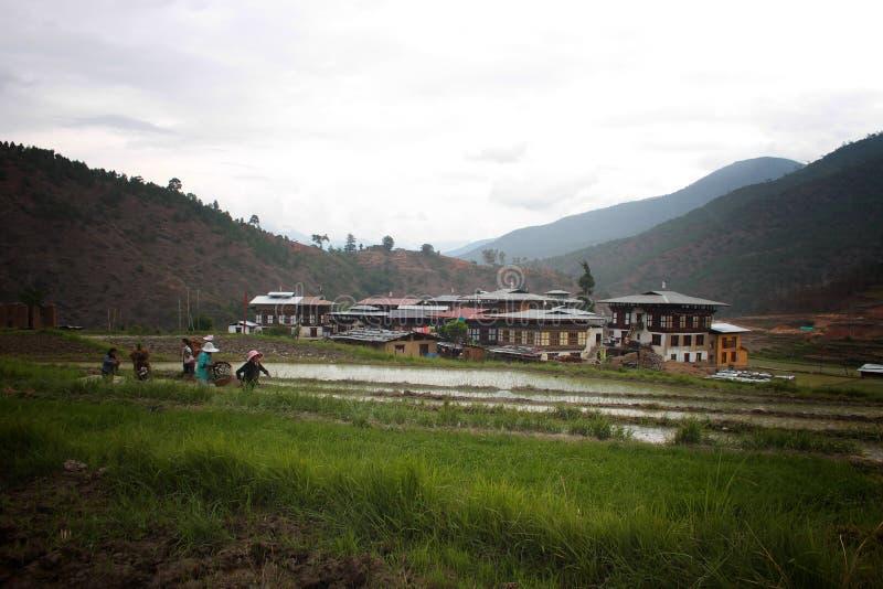稻田的农夫在村庄附近 免版税库存照片