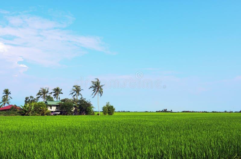 稻田进入在马来西亚的早期 椰子树和ho 图库摄影
