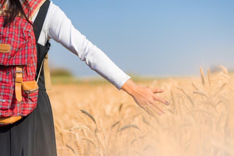 田间自然背景中的手触麦 免版税图库摄影