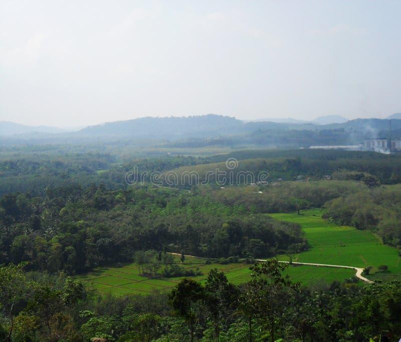 稻田 免版税库存照片