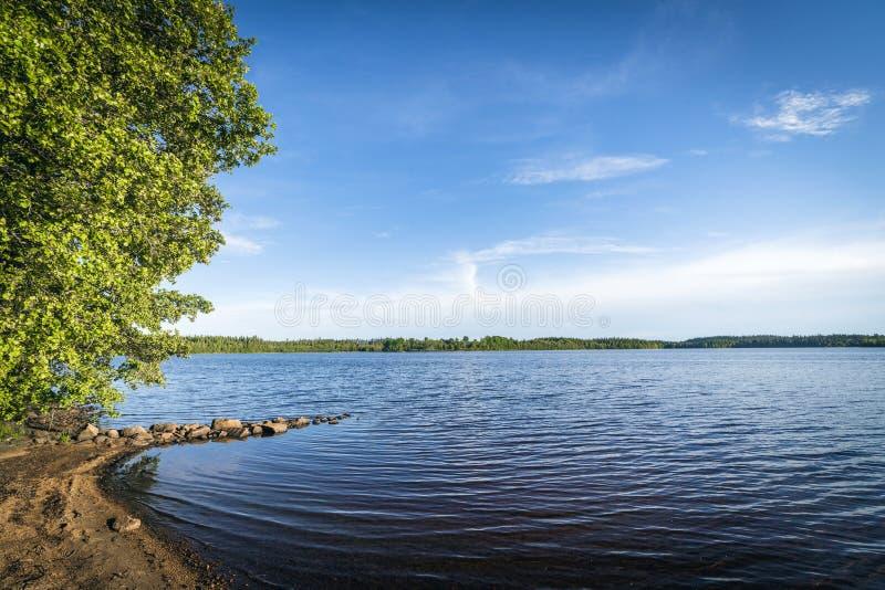 由一个大森林湖的海滩在夏天 免版税库存图片