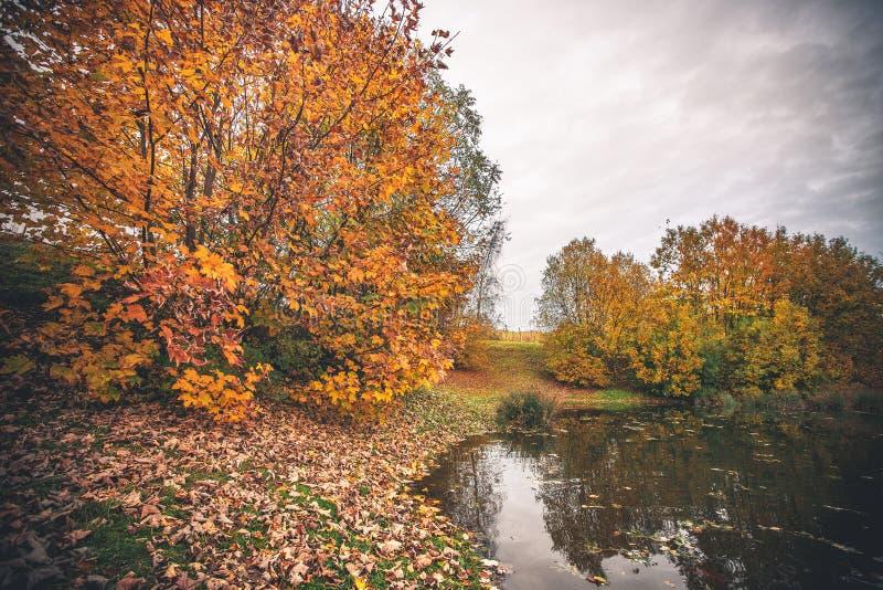 由一个小池塘的五颜六色的树秋天的 免版税库存照片