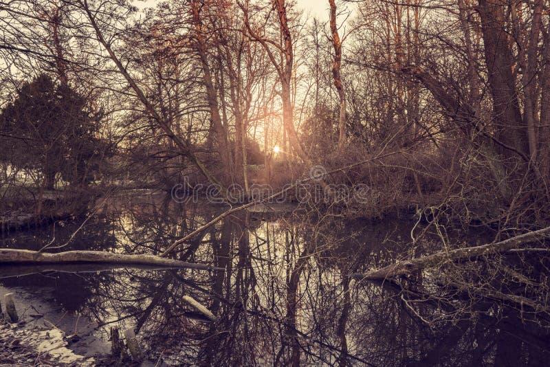 由一个森林湖的日出在冬天 库存图片