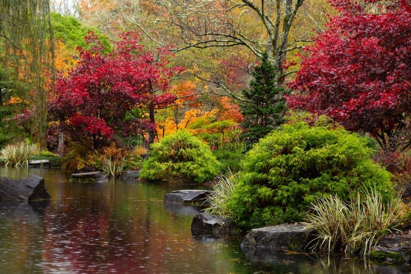 由一个池塘的充满活力的秋天颜色在吉布斯庭院的日本庭院里 免版税库存照片