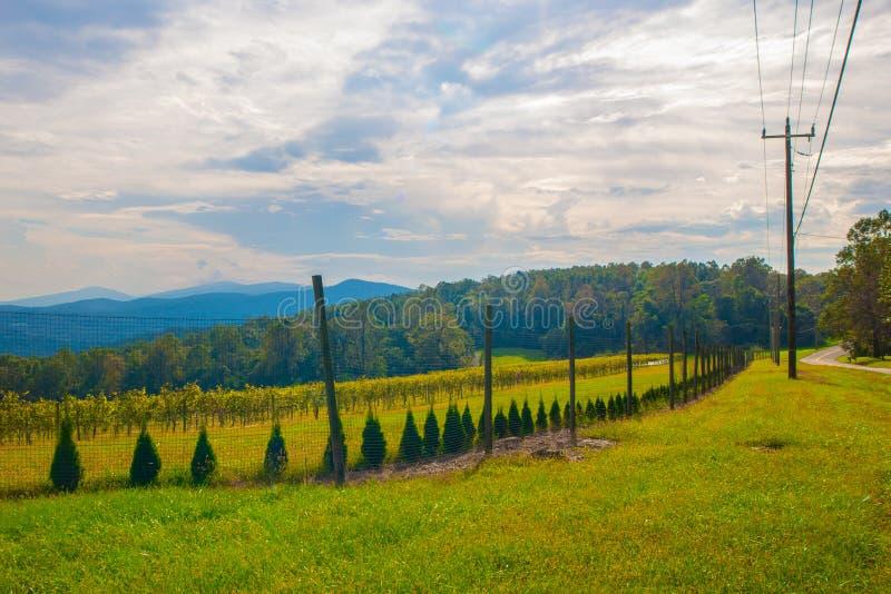 由一个葡萄园的山路山的 免版税库存照片