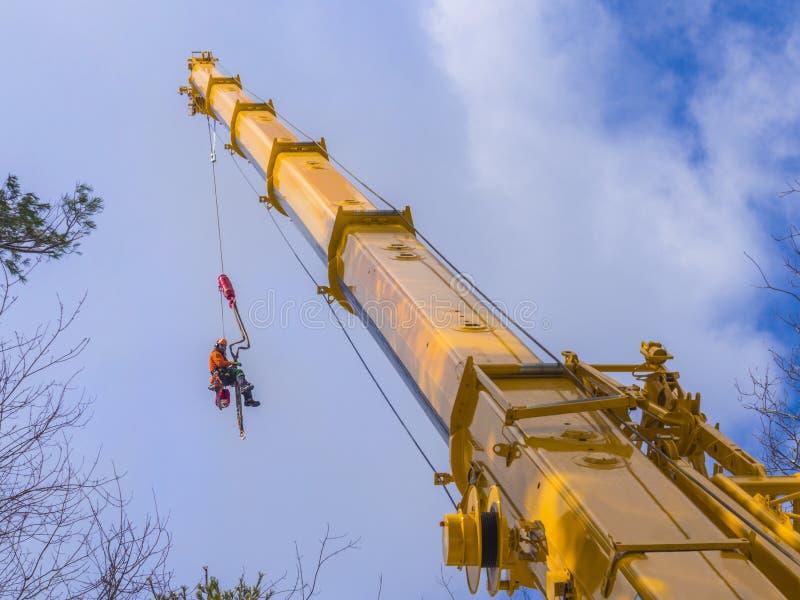 树切口伐木工人 免版税库存照片