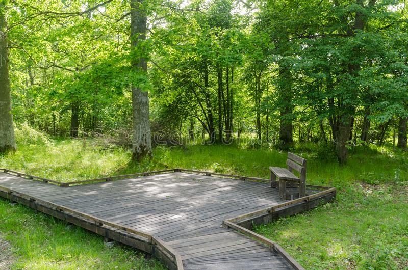 由一条木小径的长凳有在自然保护的一个木平台的 免版税库存图片
