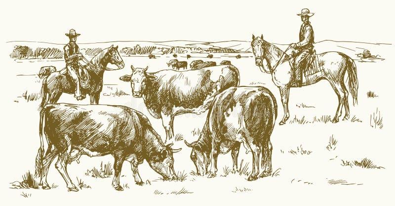 由两位牛仔的牛驱动 吃草牧场地的母牛 向量例证
