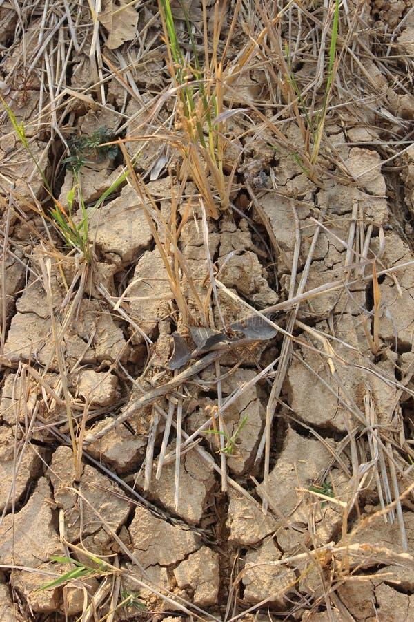 由于种植,贫瘠米的地面不能执行 免版税库存照片