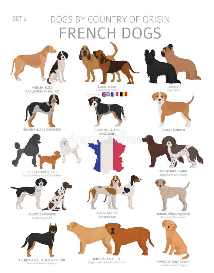 由产地的狗 法国狗品种 牧羊人,狩猎,成群,玩具、工作和服务狗集合 皇族释放例证