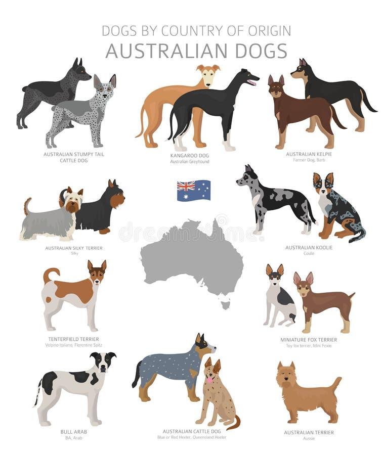 由产地的狗 澳大利亚狗品种 牧羊人,狩猎,成群,玩具、工作和服务狗集合 皇族释放例证
