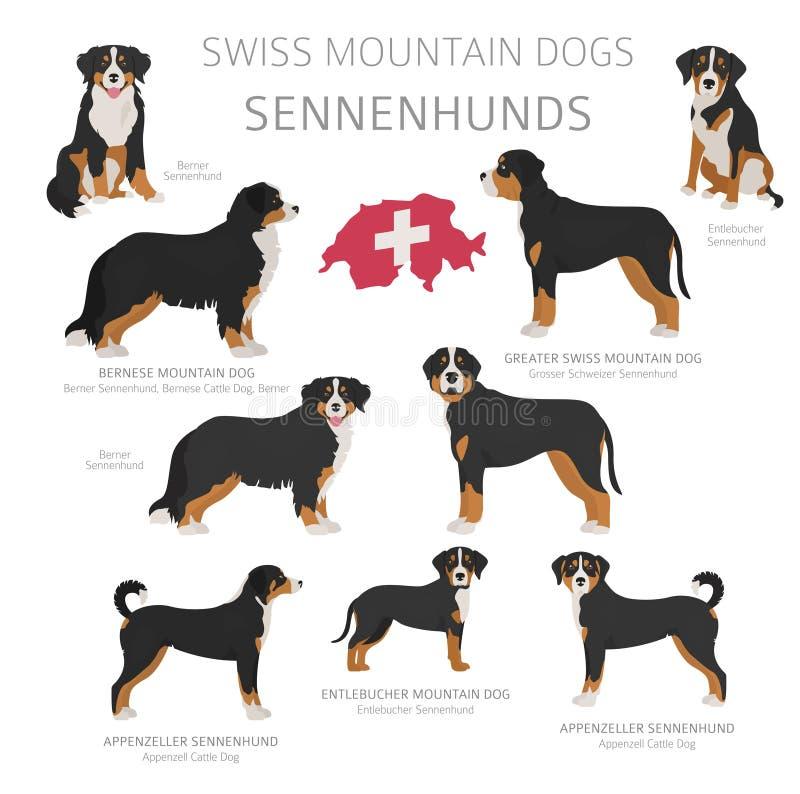 由产地的狗 瑞士狗品种 牧羊人,狩猎,成群,玩具、工作和服务狗集合 向量例证