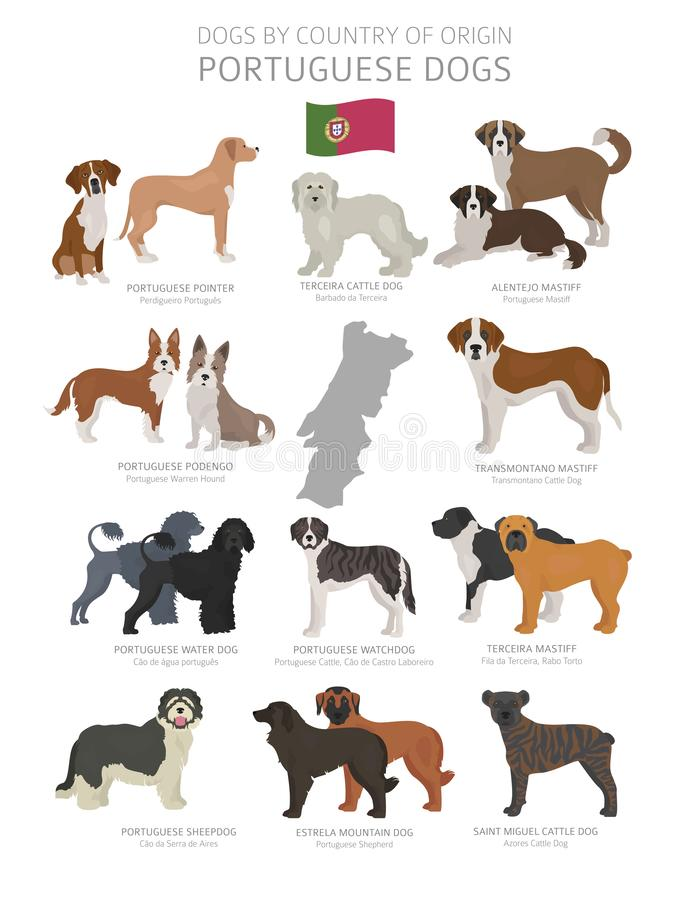 由产地的狗 葡萄牙狗品种 牧羊人,狩猎,成群,玩具、工作和服务狗集合 库存例证