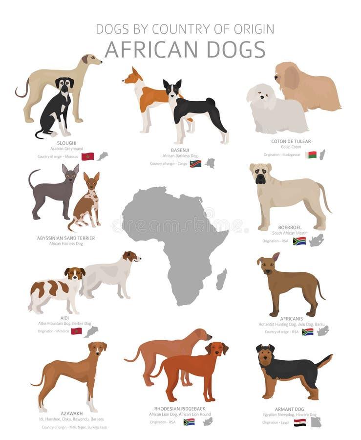 由产地的狗 非洲狗品种 牧羊人,狩猎,成群,玩具、工作和服务狗集合 皇族释放例证