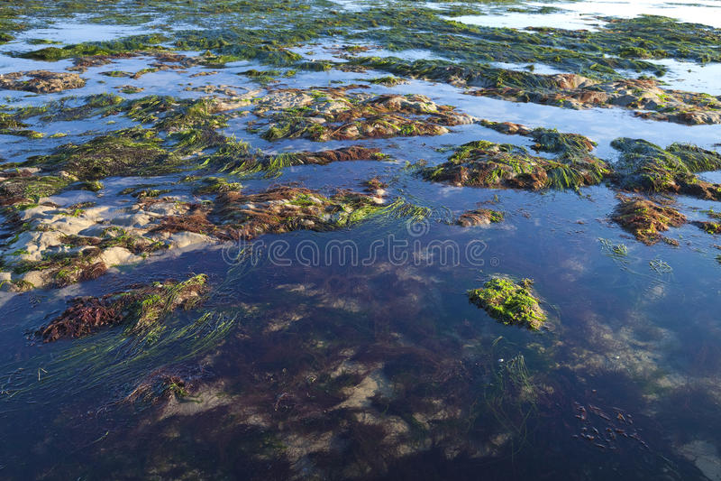 由低潮的海岸 库存图片