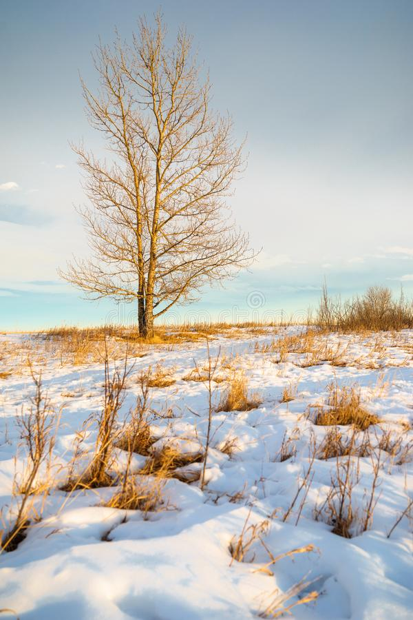 由偏僻的树的一条积雪的道路 库存图片