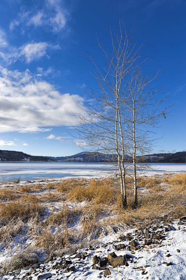 由冻湖的贫瘠树在冬天 库存图片