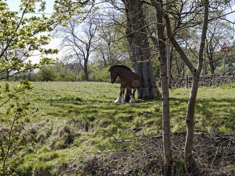 由利兹利物浦运河的马在Salterforth在兰开夏郡约克夏边界的美丽的乡下在北英国 库存照片