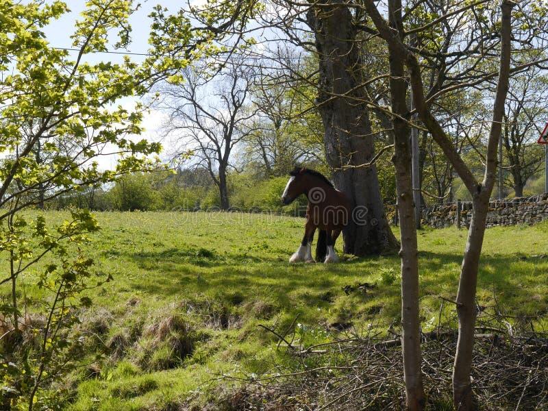 由利兹利物浦运河的马在Salterforth在兰开夏郡约克夏边界的美丽的乡下在北英国 免版税图库摄影