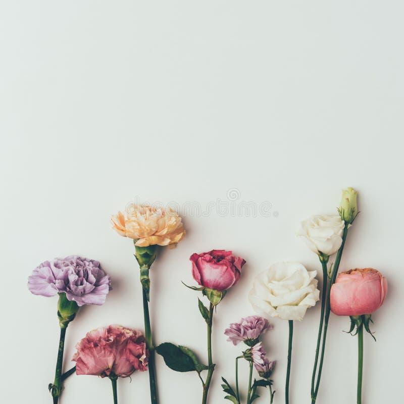 由各种各样开花做的美好的花卉边界特写镜头视图开花 库存照片