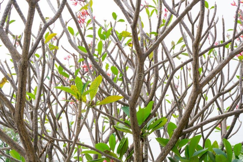 由后面照的树枝 免版税图库摄影